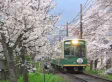 Photo showing local train passing a stretch of cherry blossom