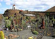 Image of Lanzarote's the Jardin de los Cactus