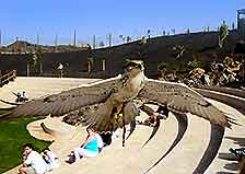 Photo of a bird of prey dispaly at Lanzarote's Rancho Texas Park