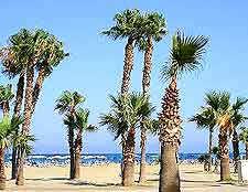 Beachfront view of palm trees