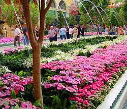 Las Vegas Parks and Gardens