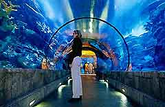 Las Vegas Attractions for Children