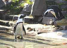 Photo of penguins at Leipzig Zoo (Zoologischer Garten)