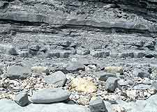 Image of fossil rocks on Monmouth Beach, Lyme Regis, Dorset, England, UK