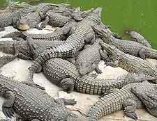Antananarivo Crocodile Farm photograph