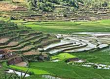Fianarantsoa Vineyards image