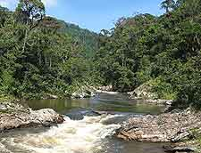 Ranomafana National Park (Parc National Ranomafana) picture