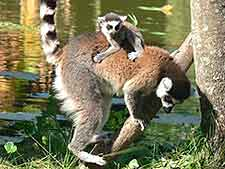 Ivoloina Zoological Park photo of lemurs