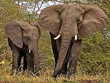 Picture of elephants at the Kasungu National Park