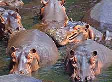 Kasungu National Park picture of hippos
