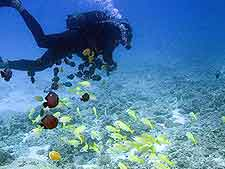 Picture of diver and Mauritius marine life
