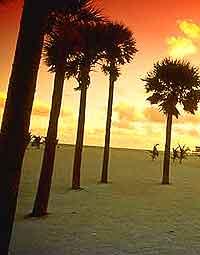 Further views of Miami beaches