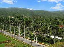 View of transport and palm tree-lined road leading into Montego Bay