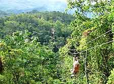Zipline Canopy Tours view
