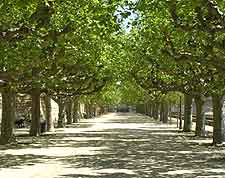 Photograph along the Promenade du Peyrou