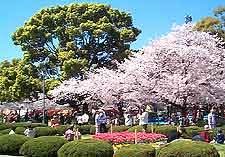 Picture of Tsurumai Park in the springtime