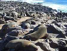Cape Cross Seal Colony panorama