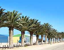 Photo of palm trees lining the beachfront at Walvis Bay