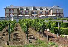 Picture of vineyard at the Domaine Carneros attraction