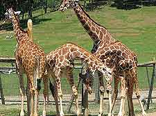 Safari West Wildlife Preserve image