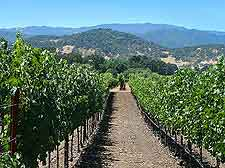 Vineyard photograph, showing surrounding scenery