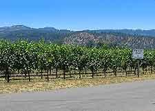 Photograph of road passing vineyard