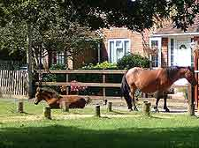 Image of wild ponies at Brockenhurst
