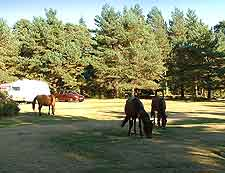 New Forest Camping: New Forest, Hampshire, England