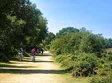 Photo showing a cycle trail in the New Forest, Hampshire, England, UK