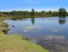 Photo of a New Forest lake