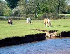 Countryside view, showing grazing ponies