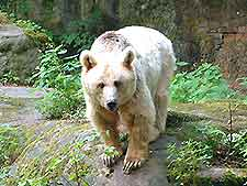 Photo of bear at the Zoo (Tiergarten)