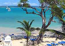 Photo of the Ocho Rios beach and palm trees