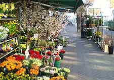 Photo of a market stall