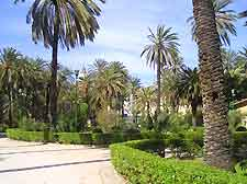 Picture of city park and plam trees
