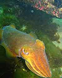 Perth Scuba Diving