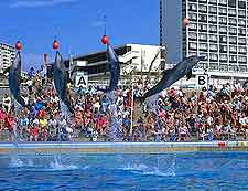Bayworld dolphin picture