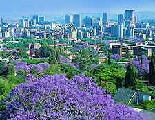 City view, showing the Jacaranda trees in seasonal bloom