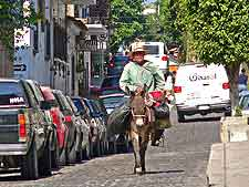 Puerto Vallarta Airport (PVR) Airlines and Terminals: Photograph of donkey in the city centre