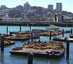 San Francisco Landmarks and Monuments
