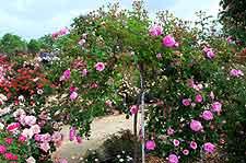 San Jose Parks And Gardens San Jose California Ca Usa