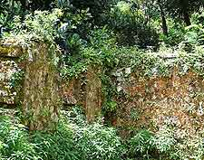 Photograph showing the ruins of the Mission Lodge in Mont Fleuri, Mahe