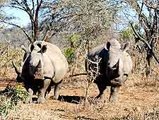Image of rhinos at wildlife reserve in Swaziland