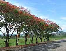 Photo of Swaziland road