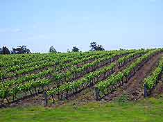 Sydney Vineyards and Wines