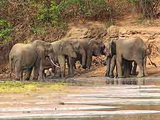 Image of elephants in the Selous Game Reserve