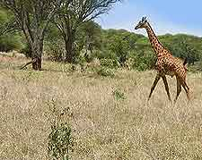 Tarangire National Park photo