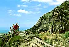 View of Tenerife's Barranco del Infierno