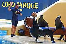 Image of Tenerife's Loro Parque sealions