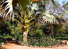 Bakau Botanical Gardens photograph